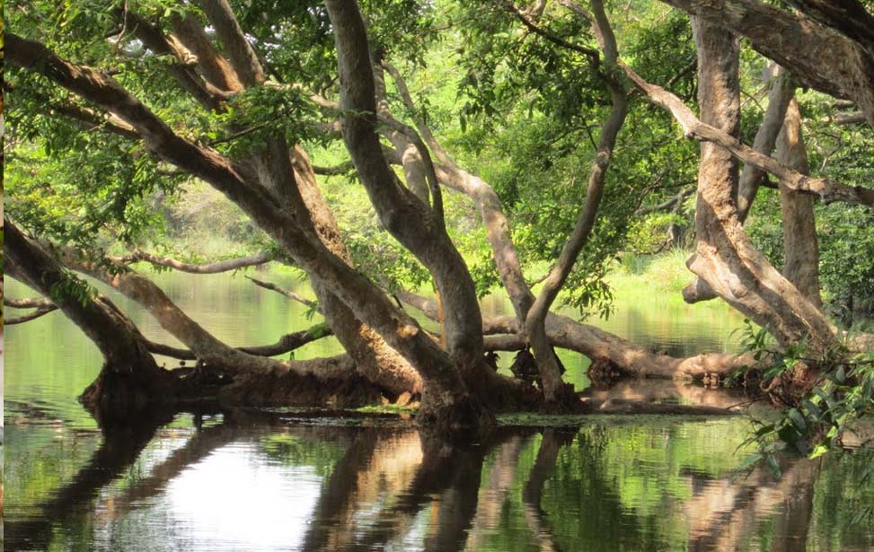 Wilpaththu National Park Inora Tour Sri Lanka